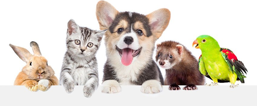 How Can I Ease the Symptoms of Pet Allergies?